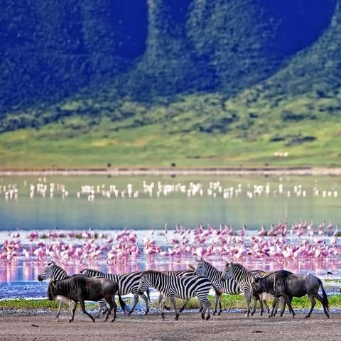 Flamingos in Ngorongoro